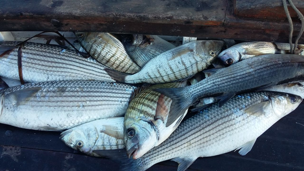 Luca e Ivan Olivieri turismo esperienziale pesca imperiale