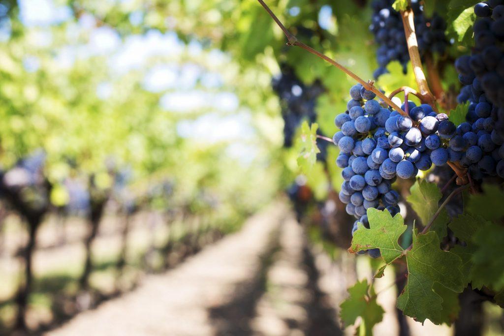 Giugno Slow 2021 a La Maddalena Vite e Vite: racconto di... vino, isole, uomini, cultura. Laboratori del Gusto: ponti fra le isole del Mediterraneo.
